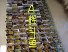 泰国斗鱼出售