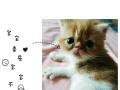 加菲猫baby