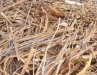仙村镇 废钢筋回收 钢筋头回收价格