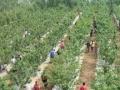 大型现代农业休闲观光示范园招商