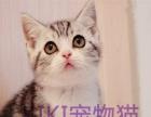 出售cfa金吉拉布偶猫加菲猫美短猫英短猫蓝猫蓝白