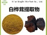白桦茸提取物 白桦茸速溶粉生产厂家 青芷生物