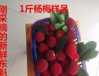 韶关始兴刘家庄杨梅采摘,免门票,欢迎来基地采摘。