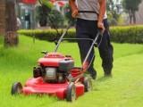 资兴市专业小区单位园林绿化养护草坪苗木修剪造型