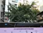 2018明霞路花市 有工艺品档和花档