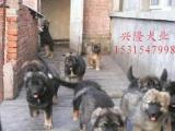 山东【肉狗】【肉狗养殖基地】临沂【肉狗价