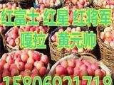 湖北红富士苹果价格    75129