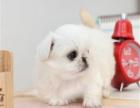 本地京巴幼犬繁殖基地 多只精品宝宝可选