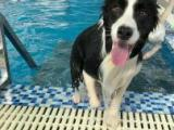兰州盎然宠物狗狗学校训练游泳寄养