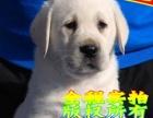冠军级种犬后代 拉拉犬、包活、带健康证、签合同