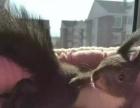 松鼠刺猬龙猫雪貂等等都有