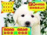 出售纯种大白熊犬一上门挑选狗狗一签协议质保健康