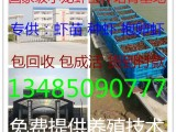 南京哪里有龙虾苗南京龙虾苗多少钱一斤南京龙虾苗培育基地
