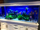 无锡鱼缸安装维修水族滤材更换观赏鱼配送鱼病治疗
