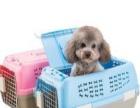 国际宠物托运,国际宠物随机托运 代办手续等