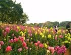 周边游深圳公司团体春游团建美丽的地方之松山湖游玩介绍