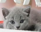 蓝猫弟弟妹妹都有