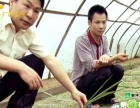 蚂蚱加盟 种植养殖 投资金额 1-5万元