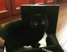 加菲种猫对外借配
