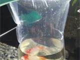供应深川鱼苗加氧袋,水生物养殖袋,活体便
