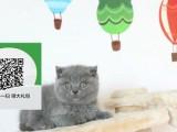镇江哪里有宠物店 镇江哪里卖宠物猫便宜 镇江蓝猫价格