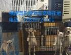宠乐游专业宠物托运(福建空运直发全国)
