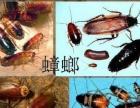 谢岗专业白蚁防治/杀虫灭鼠服务公司