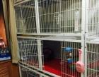 三层猫笼出售
