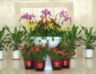 花卉,绿植租赁