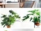 雄安绿植花卉租摆容城花卉绿植租摆办公室植物设计租摆卖绿植