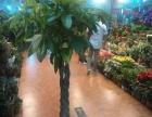 延吉市长短期花卉绿植租赁,大树出租摆,办公室租花