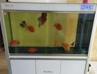 出售罗汉鱼,鹦鹉鱼1200打包出售,森森底滤水族箱