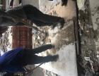 承接垃圾清运,拖渣子,搬运,沙石砖水泥等!