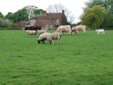 畜牧廠 招工
