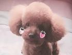 小型犬宠物美容80元