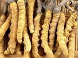 邢台市回收冬虫夏草在桥西区南长街附近