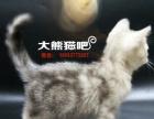 [大熊猫吧]济南家庭式繁育猫舍(银虎斑在售)