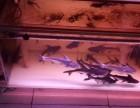 南京水族服务 南京鱼缸清洗 鱼池清洗 观赏鱼按需配送鱼缸维修
