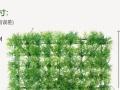 鱼缸水池造景正方形草皮
