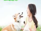 鞍山宝山万宠宠物殡仪服务宠物火化宠物安葬服务