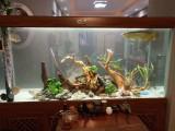 郑州鱼缸清洗保养换水专业服务
