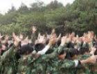 广州拓展训练,广州拓展培训,广州酷培拓展训练公司