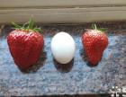 雨涵草莓采摘园