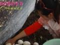 携带家人孩子体验采摘独具野生风味的珍稀 牛排菇
