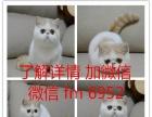 实体店出窝加菲猫金吉拉布偶猫蓝猫金渐层短毛猫