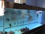 专业鱼缸清理清洗