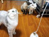 猫咪狗子寄养上门代喂