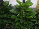 专业植物租摆 园林养护