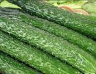 扬州蔬菜价格 扬州蔬菜配送