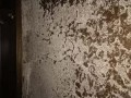东莞厚街白蚁防治,东莞塘厦白蚁防治,塘厦白蚁防治